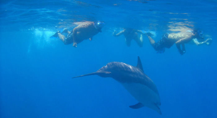 Snorkelers-with-Dolphins